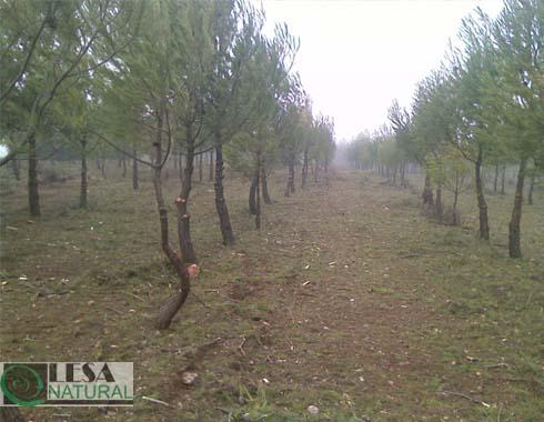 Ayuda a la regeneración forestal