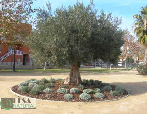 Jardinería pública