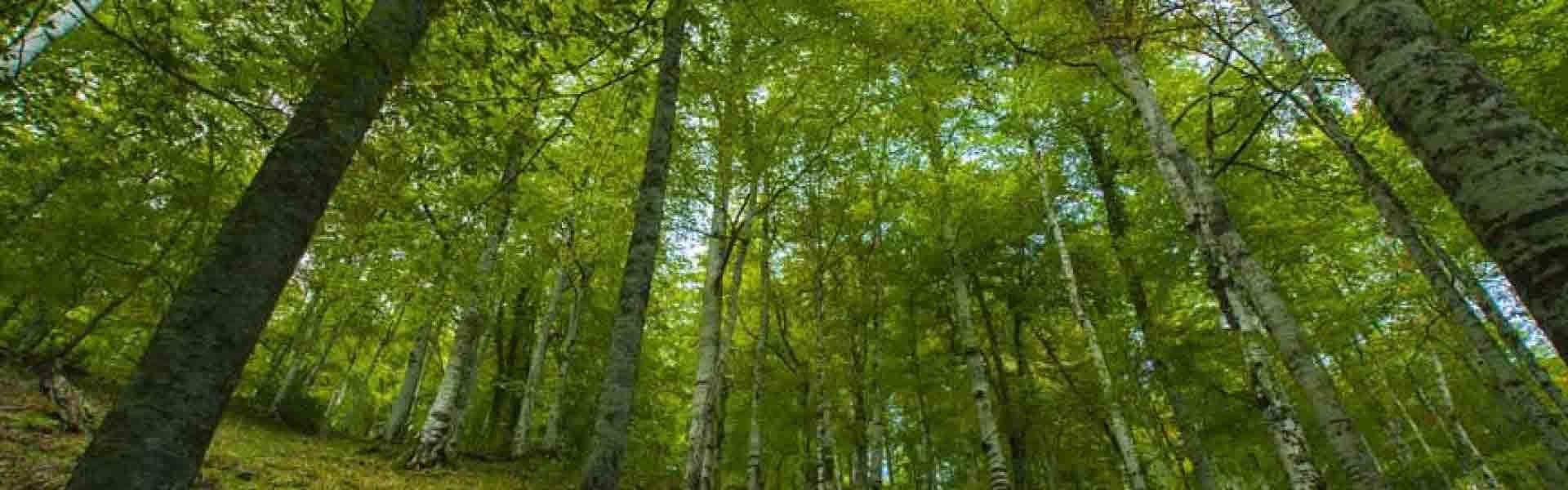 Trabajos Forestales por Lesa Natural SLU